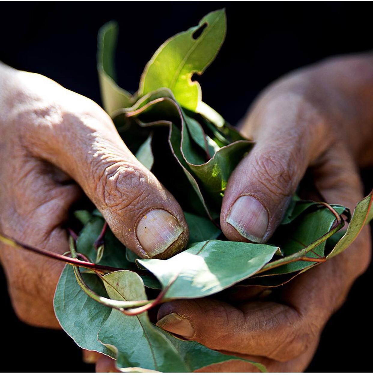 man holding leaves